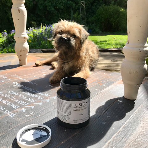 Fusion Mineral Paint Ash with Border Terrier Dog