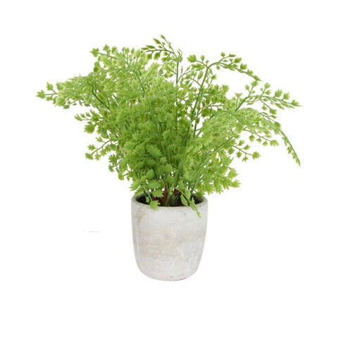 Faux Maiden Hair Fern Plant in pot