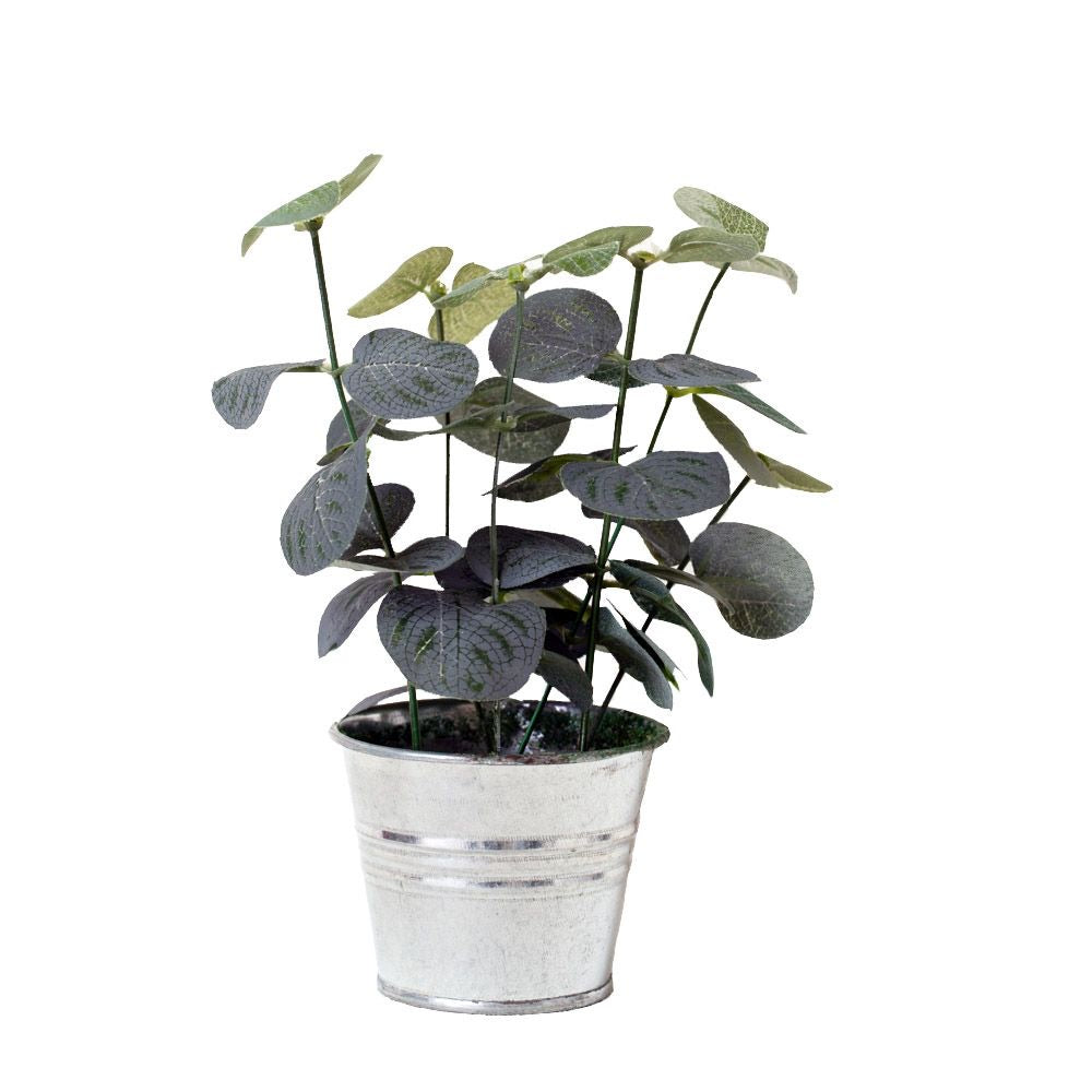 Eucalyptus in a Mini Bucket - La Di Da Interiors