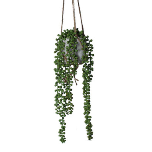 Potted Faux trailing string of pearls plant & jute hanger - La Di Da Interiors