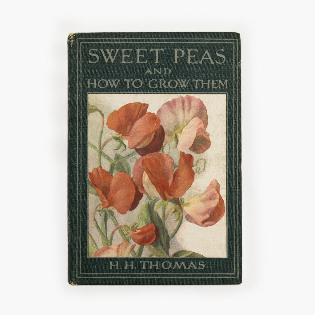 Sweet Peas, H. H. Thomas 1925