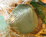 Glass Clam Shell Ornament