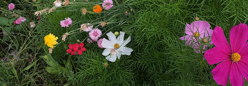 colorful flowers in green grass