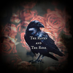 The Raven and the Rose Perfume