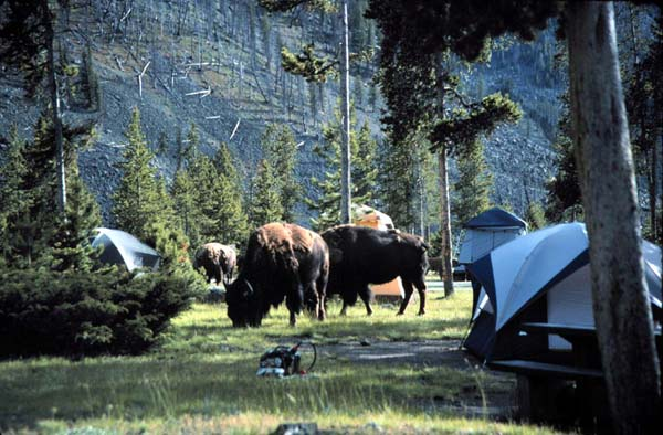 Where to camp in Yellowstone National Park