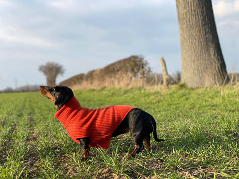 Personalised Pure Cashmere Dog Jumper