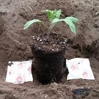 Transplanting with Super Starter Paks Wallace Organic Wonder