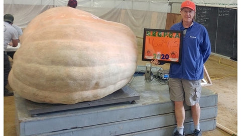1642 pound Giant pumpkin seeds
