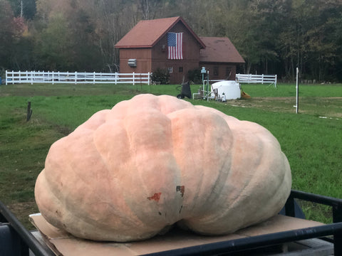 2054 pound giant pumpkin seeds