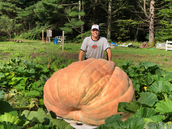 2114 pound giant pumpkin in patch