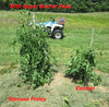 Tomato plants grown with Super Starter Paks Wallace Organic Wonder