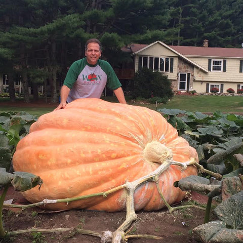 How to grow giant pumpkins Wallace's Whoppers
