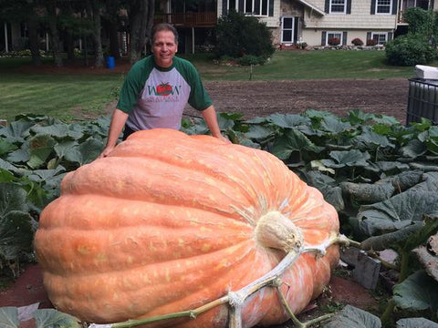 2307 pound Giant Pumpkin