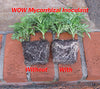 Treated with  Mycorrhizal Inoculant Wallace Organic Wonder