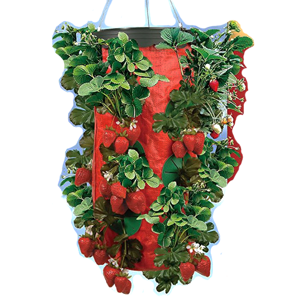Hanging At Home Strawberry Planter