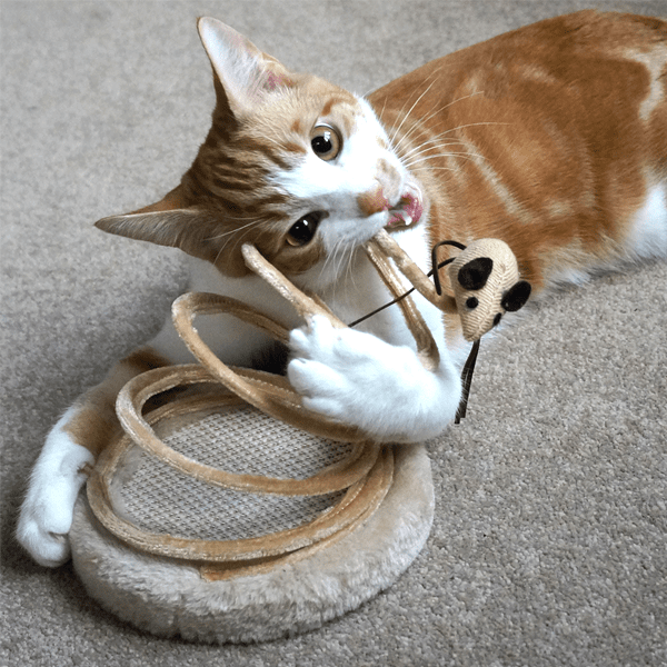 Interactive Spring Kitten Toy