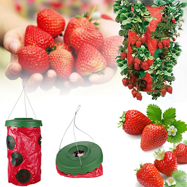 Buy 1 Get 1 Free - Hanging At Home Strawberry Planter