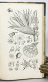 An Introduction to the Study of Botany