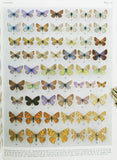 Butterflies of Afghanistan