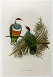 Gould and Hart Fruit Dove Hand-Colored Plate