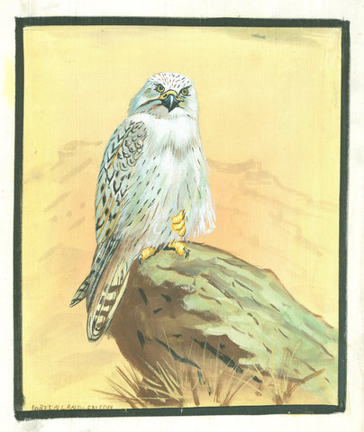Painting of a Greenland Falcon