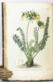 Geraniaceae: The natural order of Gerania. Illustrated by coloured figures and descriptions; comprising the numerous and beautiful mule-varieties cultivated in the gardens of Great Britain, with directions for their treatment, 5 volumes, complete.