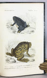Reptiles vivants et fossiles (the hand-colored plate version)