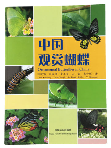 Ornamental Butterflies in China