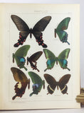 The Macrolepidoptera of the World, section I, volume 1: The Palaearctic Butterflies (Rhopalocera), text and plates, in two volumes, complete