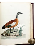 Nouvelles Illustrations de Zoologie; New Illustrations of Zoology, containing fifty coloured plates of new, curious, and non-descript Birds, with a few Quadrupeds, Reptiles and Insects