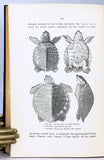 The Reptiles of the Indo-Australian Archipelago, volume I: Lacertilia, Chelonia, Emydosauria + volume II: Ophidia, 2 volumes, complete