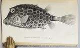 A Collection of 55 Papers on Fishes, mostly from Island Southeast Asia (Indonesia), 1862-1866