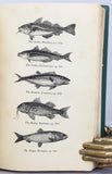 The Natural History of the Order Cetacea, and the Oceanic Inhabitants of the Artic Regions