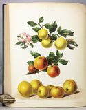 The Herefordshire Pomona, containing figures and descriptions of the most esteemed kinds of Apples and Pears, Volume 2 only with 77 fine chromolithographs colored from Nature by Miss Ellis and Miss Bull