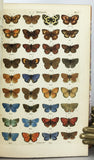 Index Entomologicus; or, a complete illustrated catalogue of the Lepidopterous Insects of Great Britain, containing 1944 figures of moths and butterflies, accurately engraved and carefully coloured after nature