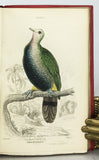 Ornithology: Pigeons (The Naturalist's Library, volume IX)