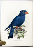A Monograph of the Coraciidae, or the family of the Rollers