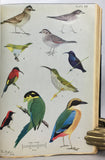 The Birds of Burma, second edition