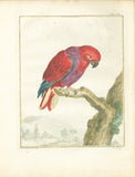Perroquet des Indes (Red-purple Lory from Ceylon) Hand-Colored Plate with complete text