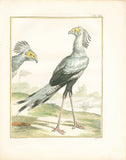 Oiseae de Proie Nomme le Sagittaire (Secretarybird) Hand-Colored Plate with complete text