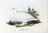 Edward Lear Short-toed Ptarmigan Hand-Colored Plate