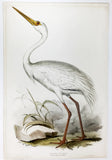 Edward Lear White Crane Hand-Colored Plate