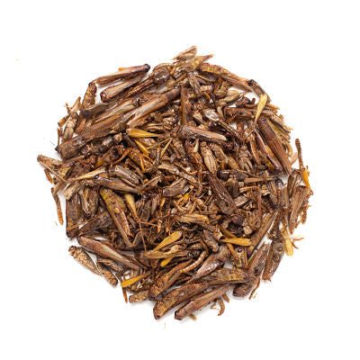 Bulk Insect Mixture 100g