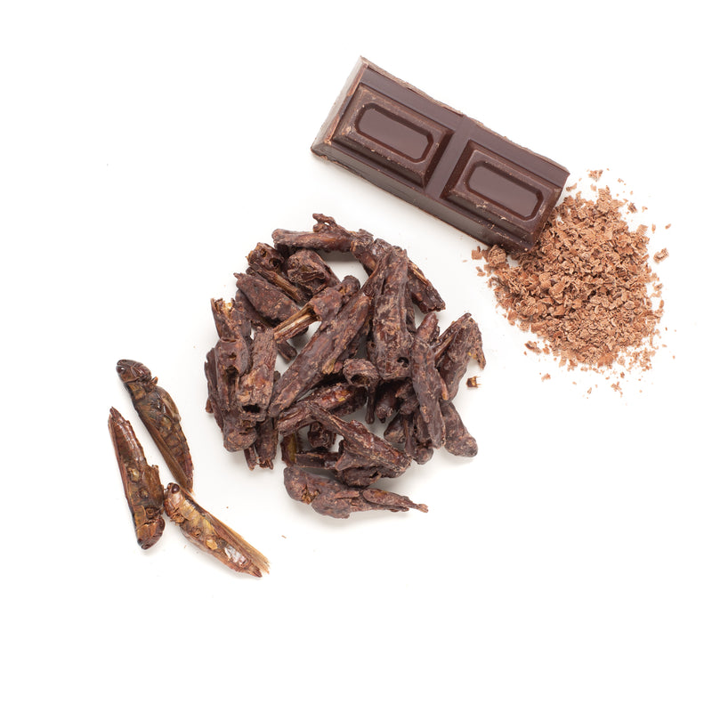 Chocolate Coated Grasshoppers 10g
