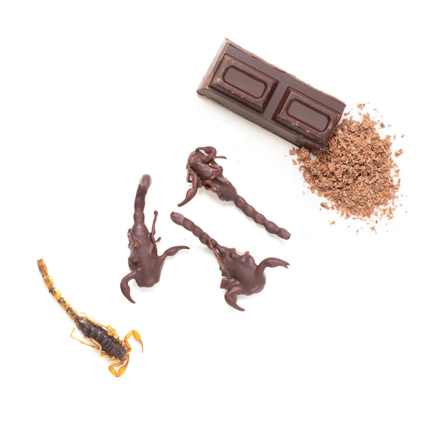 Chocolate Coated Scorpions 10g