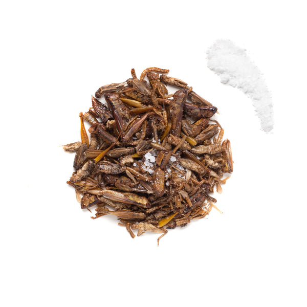 Lightly Salted Insect Mixture 15g