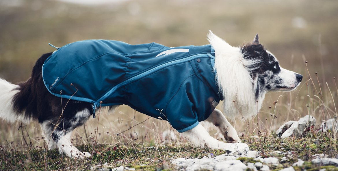 Clothes for dogs.|Одежда для собак.