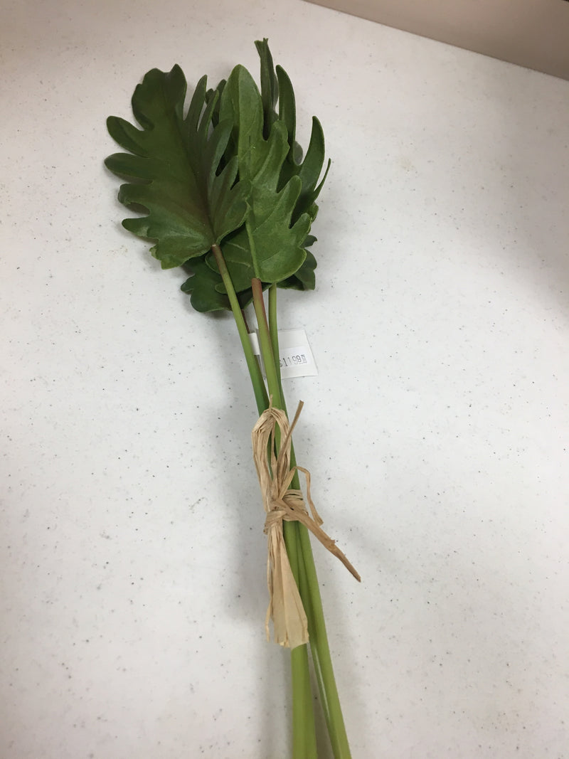 Philodendron Split Top Leaf Stem - 19inches