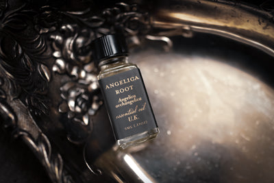 Single Essence of Angelica Root