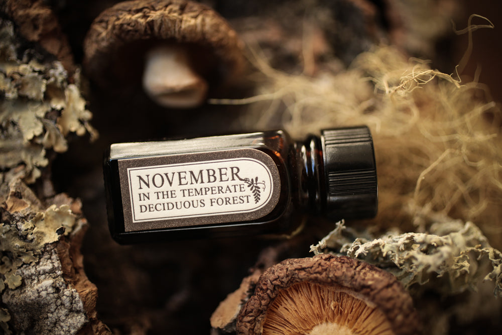 November in the Temperate Deciduous Forest